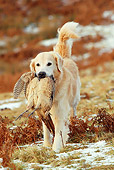 DOG 03 NR0029 01