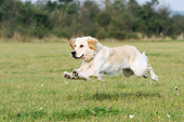 DOG 03 NR0046 01