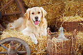 DOG 03 PE0004 01