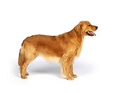 DOG 03 RK0049 01