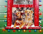 DOG 03 RK0143 01