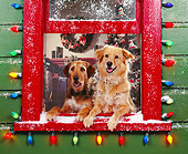 DOG 03 RK0143 04