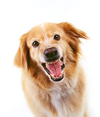 DOG 03 RK0193 20