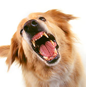 DOG 03 RK0193 24