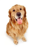 DOG 03 RK0249 25