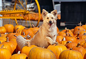 DOG 03 RK0266 02