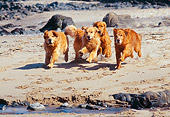 DOG 03 RK0275 09