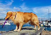DOG 03 RK0387 23