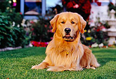 DOG 03 RK0416 05