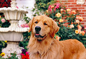 DOG 03 RK0417 19