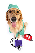 DOG 03 RK0478 01