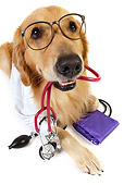 DOG 03 RK0482 01