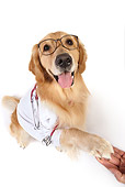 DOG 03 RK0487 01