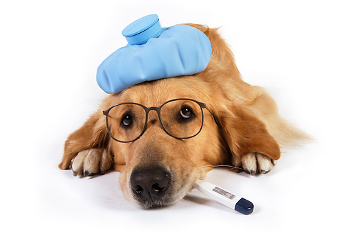 best flea treatment for dogs