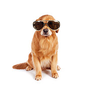 DOG 03 RK0497 01