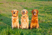 DOG 03 RK0522 01