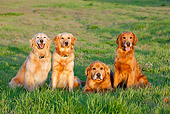 DOG 03 RK0523 01