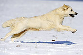 DOG 03 SS0011 01