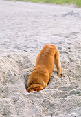 DOG 03 CE0002 01