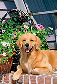 DOG 03 CE0003 01