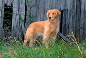DOG 03 CE0010 01