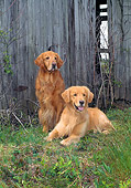 DOG 03 CE0011 01