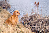 DOG 03 CE0017 01