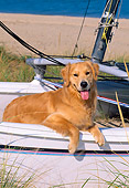 DOG 03 CE0018 01