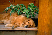 DOG 03 DB0021 01
