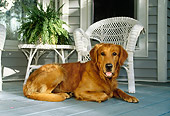 DOG 03 DB0024 01