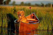 DOG 03 DB0032 01