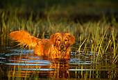 DOG 03 DB0034 01