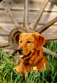 DOG 03 DB0057 01