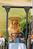 DOG 03 DB0059 01