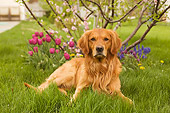 DOG 03 DB0063 01