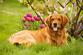 DOG 03 DB0064 01