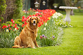DOG 03 DB0066 01