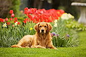 DOG 03 DB0067 01