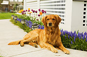 DOG 03 DB0068 01