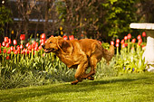 DOG 03 DB0072 01