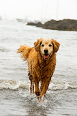 DOG 03 DB0076 01
