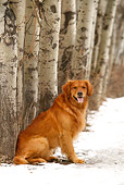 DOG 03 DB0087 01