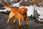 DOG 03 DB0093 01