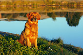 DOG 03 DB0100 01