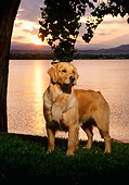 DOG 03 DC0026 03