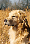 DOG 03 DC0027 01