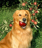 DOG 03 FA0003 01