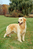 DOG 03 FA0006 01