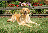 DOG 03 FA0010 01
