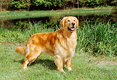 DOG 03 FA0012 01